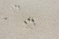 Dog Footprints on the Sand Stock Photo