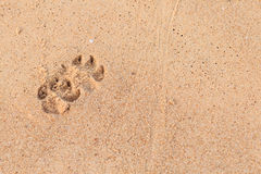 A Dog footprints on sand Royalty Free Stock Image
