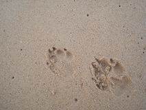 Dog footprints. In the sand on the floor Royalty Free Stock Photos