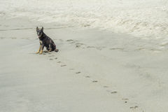 Dog and footprints Royalty Free Stock Photography