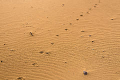Dog footprints in the sand. A paw print in the sand Stock Image