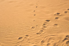 Dog footprints in the sand. A paw print in the sand Royalty Free Stock Photography