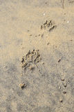 A Dog footprints on sand Royalty Free Stock Photography