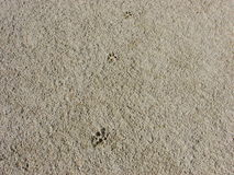Dog footprints in the sand. For wallpaper an more Royalty Free Stock Image