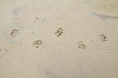 Dog footprints  sandy beach. Summer background Royalty Free Stock Photos