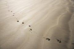 Dog footprints Stock Photography