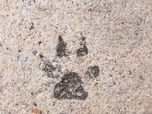 The dog footprints or the dog step on concrete cement street look stock image