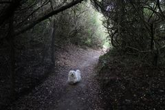 A dog in forest stock photography