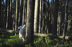 Dog in forest. Royalty Free Stock Photo