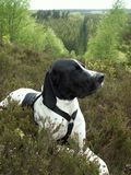 Dog in forest Royalty Free Stock Images