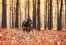 Dog in the forest Royalty Free Stock Image