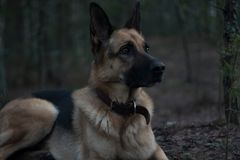 Dog in forest Stock Photos