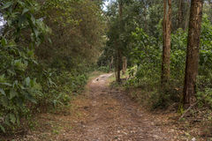 Dog on the forest path. There is a dog on the forest path Royalty Free Stock Photography