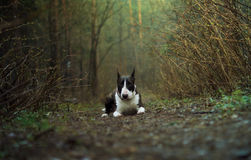 Dog forest spring Royalty Free Stock Photography