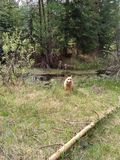 Dog in forest. Dog standing in front of water Stock Photo