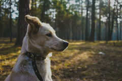 Dog in forest. Yaung white dog in forest Stock Photo