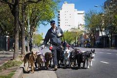Dog fotgängaren Pasea Peros med en packe av hundkapplöpning i en gata av den San Telmo grannskapen i staden av Buenos Aires, Arge Royaltyfri Bild