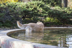 Dog in the fountain Royalty Free Stock Photo