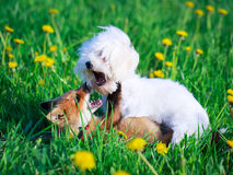 Dog and fox Royalty Free Stock Images