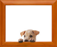 Dog with frame Stock Photos