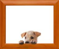 Dog with frame Stock Photos