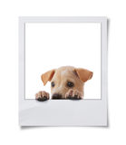 Dog with frame Stock Image