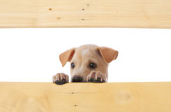 Dog with frame Stock Images