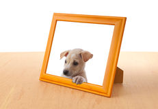Dog with frame Stock Photography