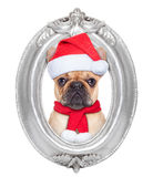 Dog in a frame Royalty Free Stock Photography