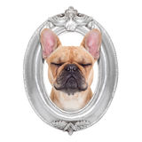 Dog in a frame Stock Image