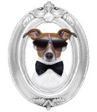 Dog in a frame Stock Photos