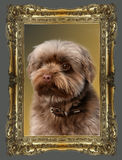 Dog in a frame Royalty Free Stock Photos