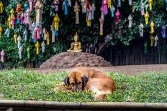Dog framme av att meditera Buddha med pappers- lampor Royaltyfri Foto