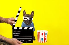 Dog French Bulldog in 3D glasses looks out of the director`s crackers. popcorn royalty free stock images