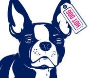 Dog French bulldog Hot Dog Royalty Free Stock Images