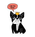 Dog French bulldog queen fun symbol isolate on white. Royalty Free Stock Photography
