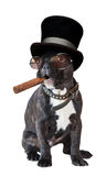 Dog french bulldog sitting with a cigar Royalty Free Stock Photography