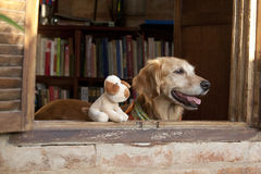 Dog and friend dog toy Royalty Free Stock Photography