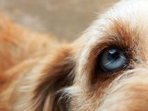 Dog, Friend, Eye, Blue Eye Stock Photo
