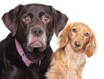 Dog friends stock photography
