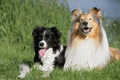 Dog friends Stock Photo