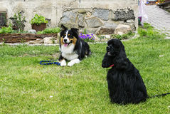 Dog friends in the garden. Dog friends sitting in the garden Stock Photos