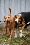 Dog friends royalty free stock photos
