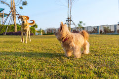 Dog Friendship Royalty Free Stock Images