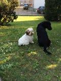 Dog friendship - little couple dog stock photos