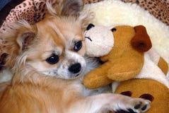 Dog friens Stock Photos