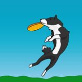 A dog and frisbee. A dog is catching a  frisbee Royalty Free Stock Photo