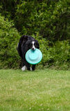 Dog and Frisbee Stock Photos