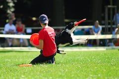 Dog frisbee championship Royalty Free Stock Photo