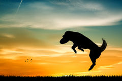 Dog with frisbee Royalty Free Stock Photography